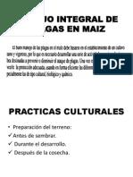 Manejo Integral de Plagas en Maiz Mayo