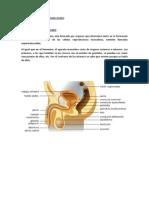 Proyecto Anatomia
