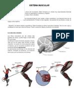 Contenido de Sistema Muscular2