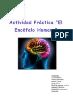 Trabajo de Biología El Encéfalo Humano