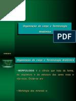 14557326 Anatomia Terminologia