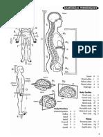 Princeton Review Anatomy Coloring Book
