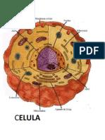 Celula Imagen y Agroindustria (1)