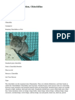 Chinchilla Information, Chinchillas