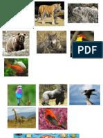 Animales Mamiferos y Aves
