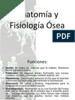 Tema 1 Anatomía y Fisiología Ósea