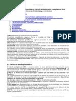 Comportamientos Reticulo Endoplasmico Complejo Gogi Endosomas Lisosomas Peroxisomas