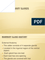 16_ Bovine Mammary Glands Complete
