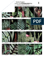 Youblisher.com-864123-1 Plantas de America Tropical