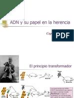 ADN y Herencia
