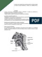 SL-Clasificacion.docx