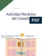 Actividad Mecnica Del Corazn Set 2004 120285995798405 3