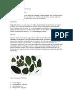 Datos Ficus
