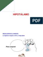 hipotalamoII
