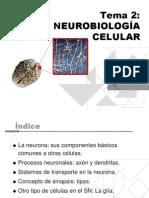 Neurobiologia Celular