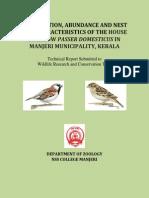 House Sparrow Passer Domesticus_manjeri Munipality_kerala