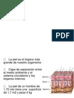 Anat y Fisio de Piel