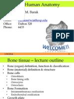 L04 Bone Tissue