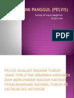 Anatomi Panggul (Pelvis) Ppt (Ikha)