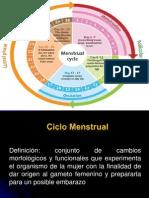 2.Ciclo Menstrual- Hud