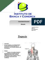 Kinesiología Estructura Musculos