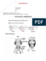 CLASE INSECTA.docx