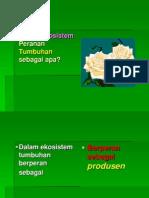 fotofospor