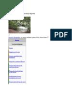 Wetland Text Report