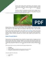 Malaria Adalah Penyakit Menular