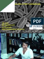 Bacterial Diseases Tomatoes Jay Scott