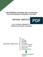 SISETMA DIGESTIVO FMVZ