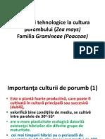 C3 Porumbul