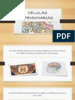 CELULAS EPENDIMARIAS.pptx