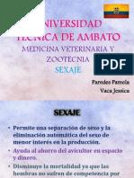 Sexaje en Pollos y Codornices - Muda Forzada