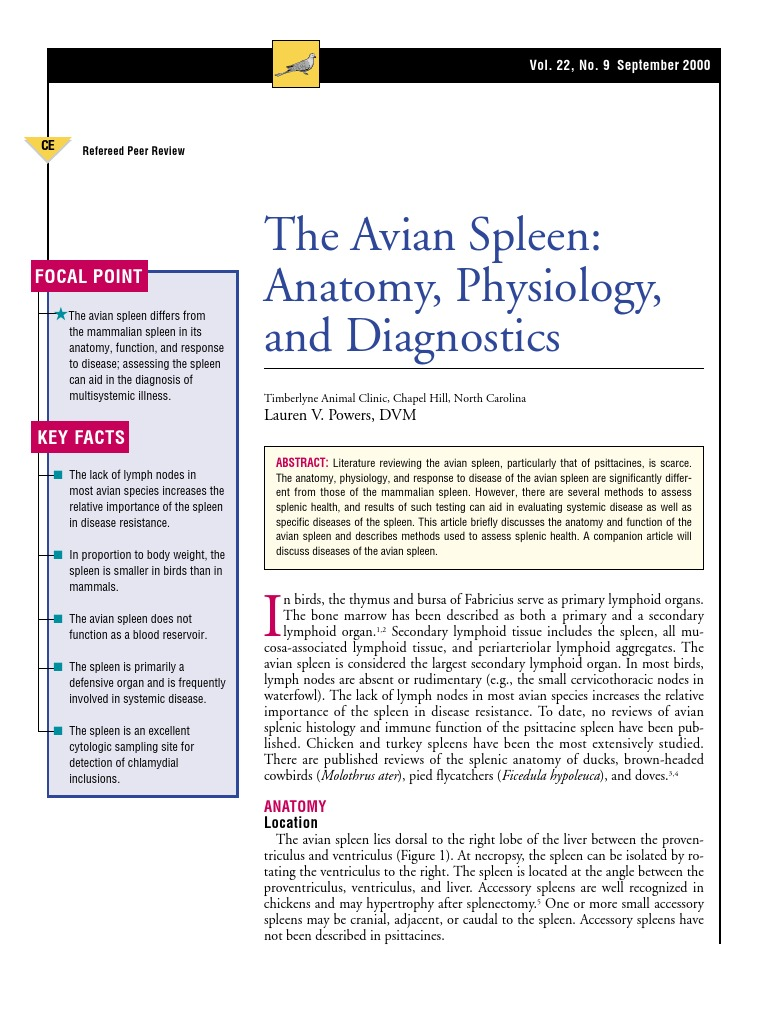 AVIAN-The avıan spleen anatomy,physiology and diagnostics | Spleen ...