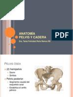 Anatomia Pelvis y Cad Era
