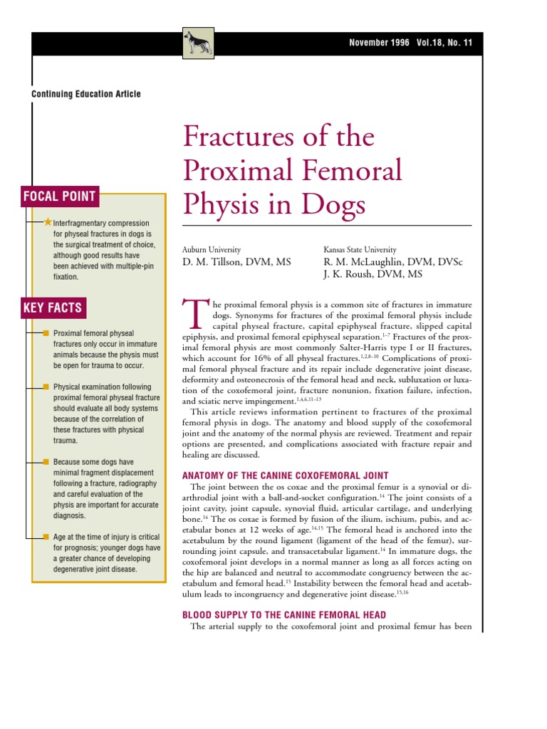 CANINE-Fractures of the Proximal Femoral Physis in Dogs   Hip ...