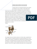 Hip Replacements in Spanish