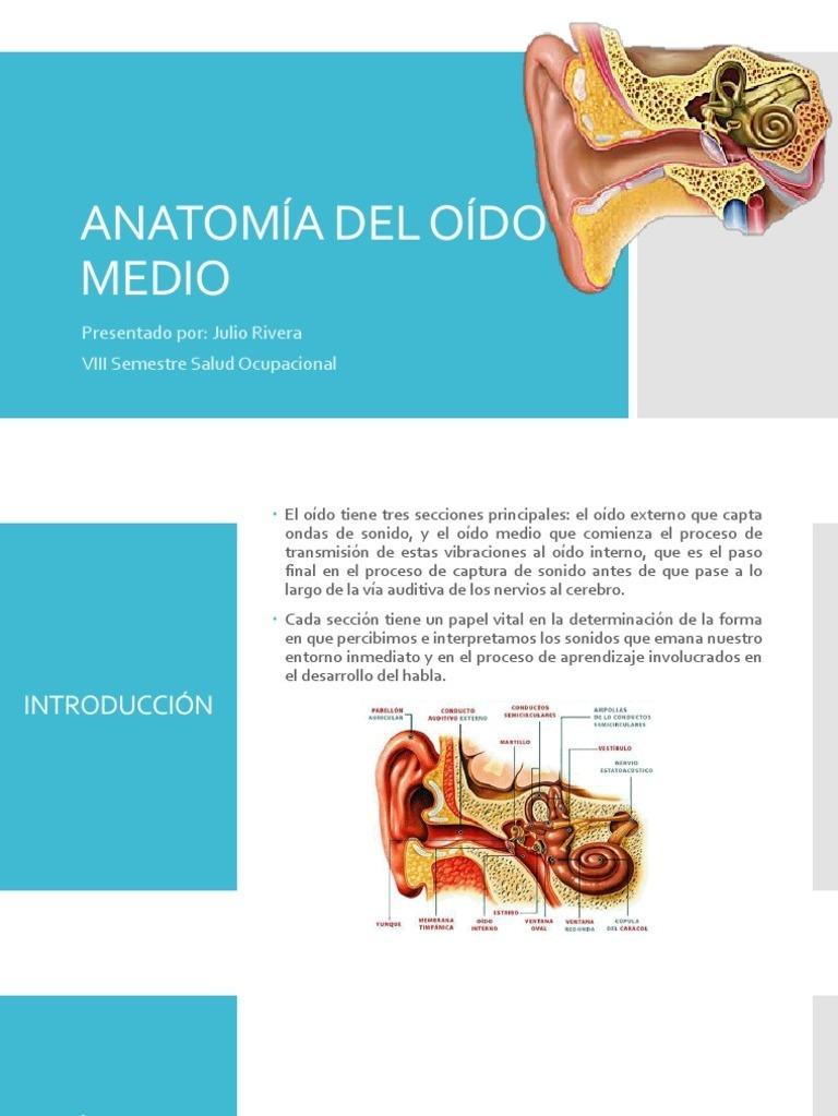 Dorable Anatomía De Una Onda De Sonido Regalo - Imágenes de Anatomía ...