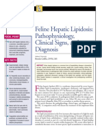 FELINE-Hepatic Lipidosis -Pathophysiology,Clinical Signs and Diagnosis