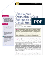 FELİNE-Upper airway obstruction in cats pathogenesis and clinical signs