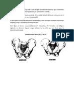 131491101-OSTEOLOGIA-FORENSE.docx