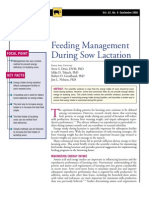 SOW-Feeding Management During Sow Lactation