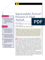 Supracondylar Femoral Fractures in Adult Animals