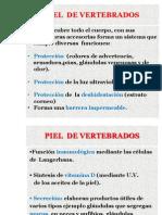 PIEL VERTEBRADOS.pdf