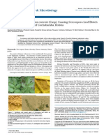 First Report of Passalora concors (Casp.) Causing Cercospora Leaf Blotch in the Andean Region of Cochabamba, Bolivia