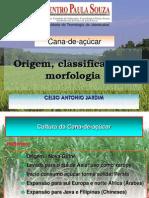 1º Aula MORFOLOGIA , CLASSIFICAÇÃO E ORIGEM DA CANA 2014.ppt