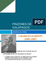 PINZONES DE GALAPAGOS.pptx