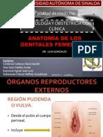 EQUIPO 1. ANATOMIA DE GENITALES FEMENINOS (1) (1).pptx