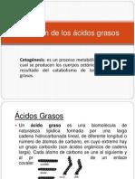 Oxidación de los ácidos grasos.pptx
